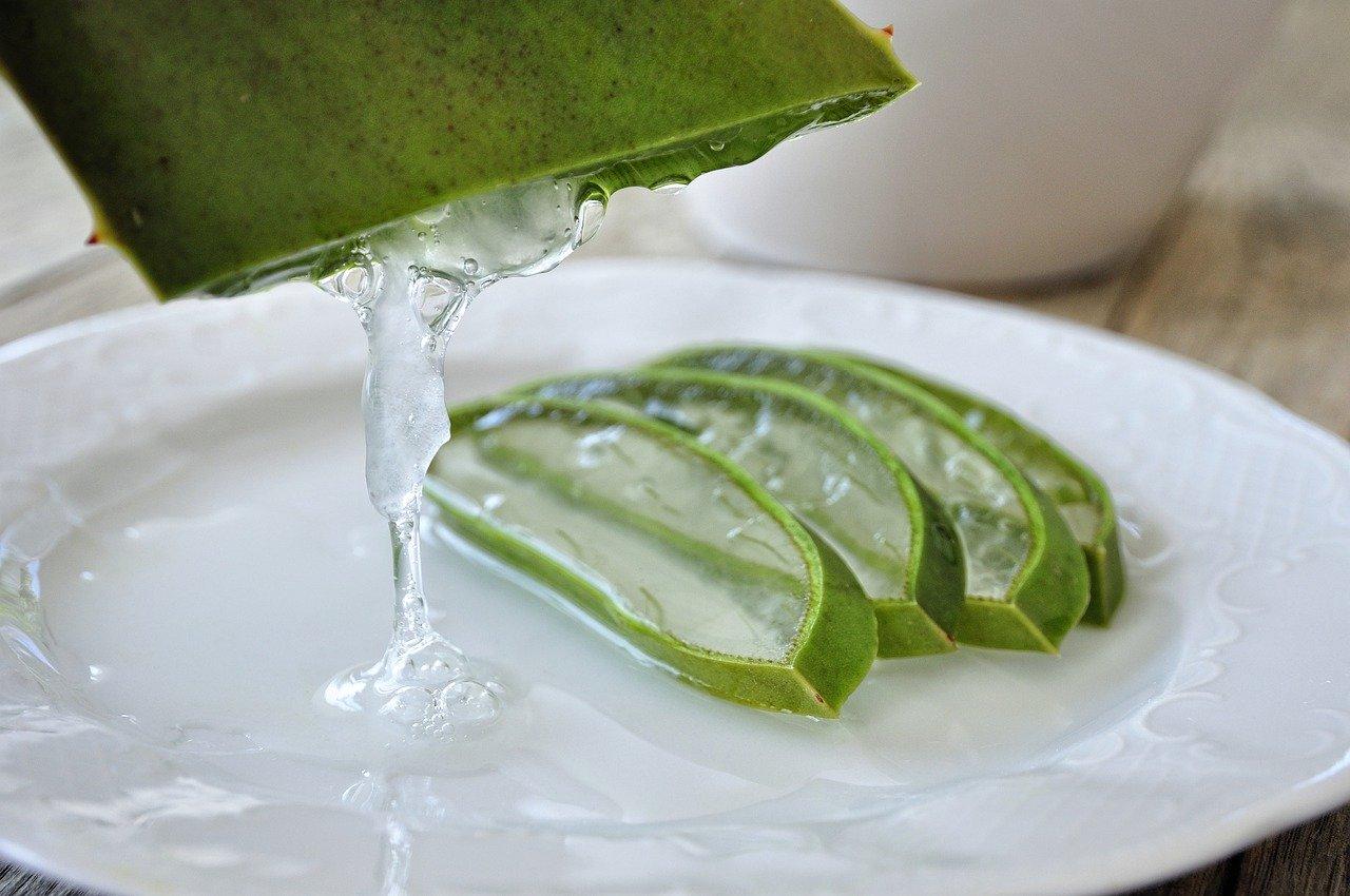 एलो वेरा (Aloe Vera) के औषधीय गुण